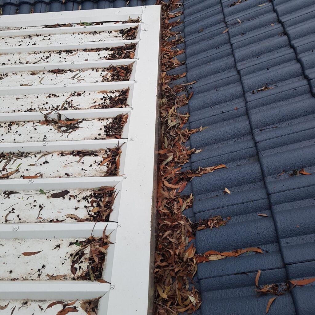 leaf buildup on roof